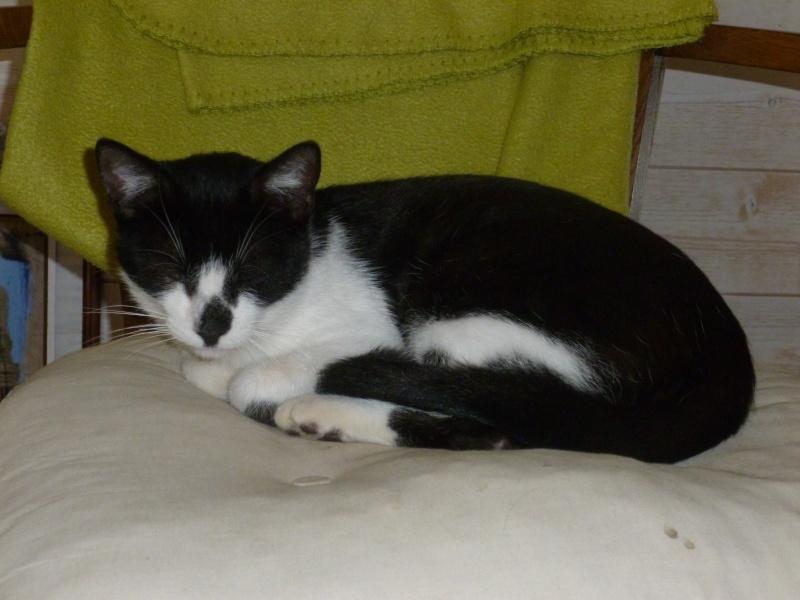 IZOU, jeune mâle noir et blanc, né en 08/2013 00110