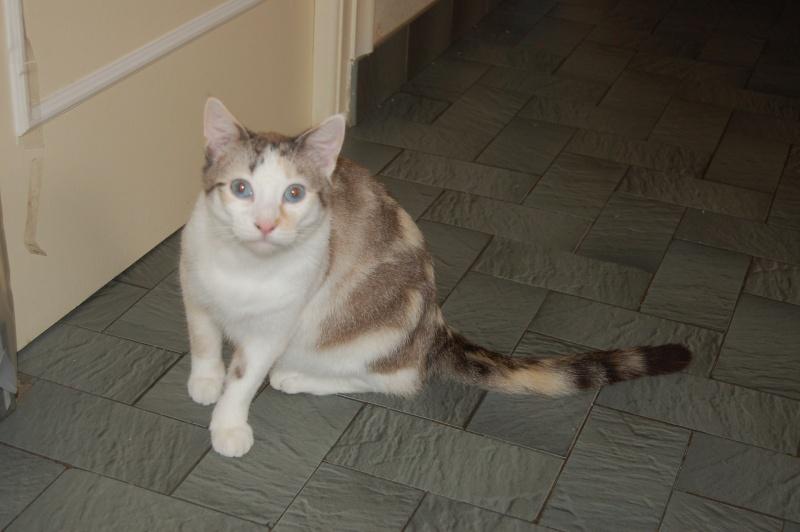 Epona, femelle tricolore blanche, née le 29 juin 2009 2012_o10