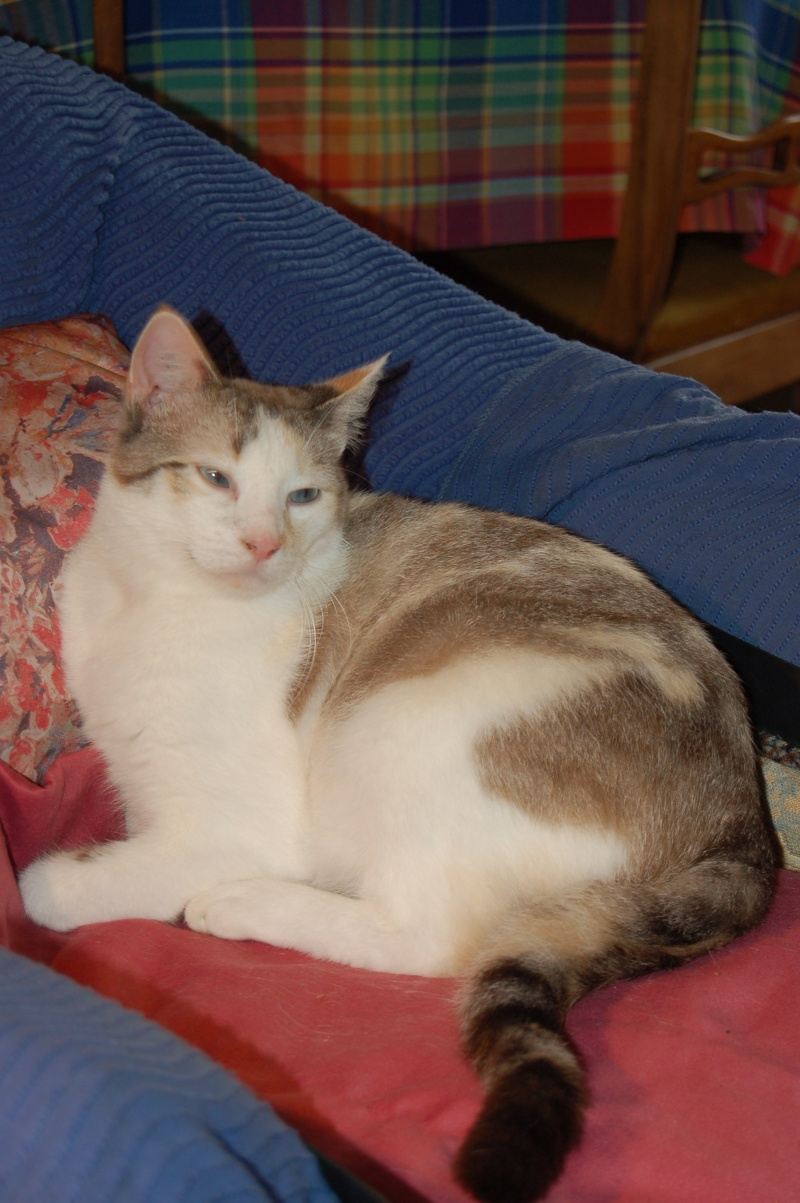 Epona, femelle tricolore blanche, née le 29 juin 2009 2012_o12
