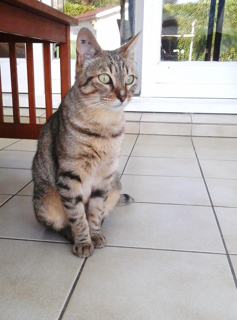 Irisa, femelle tigrée fauve, née le 01/04/2013 - Page 1 20140610