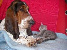 Jadore, chatonne grise tigrée  née en mai 2014  31c10