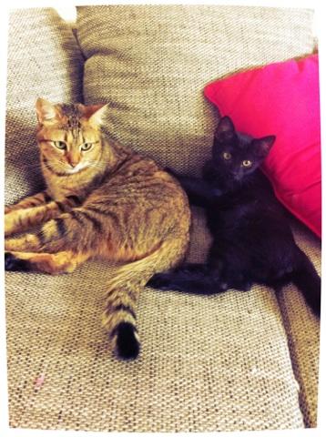 JUNIOR, chaton européen noir, né le 01/03/2014 Img_4810