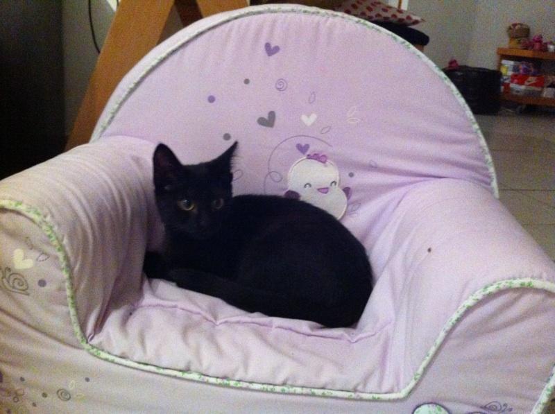 Jolicoeur, chaton type européen, noir née le 01/07/2014 Img_8310