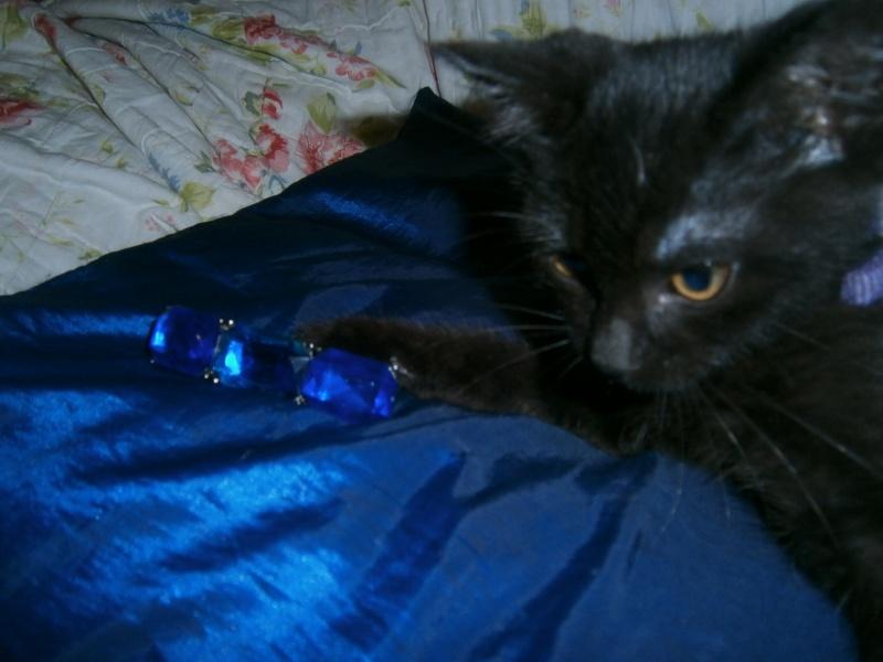 Jappeloup, chaton mâle type européen, noir avec tâche blanche, né le 01/05/2014 P7280310