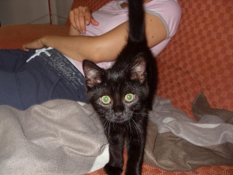 Himalaya, chaton femelle noir née le 20/05/2012 Sdc12811