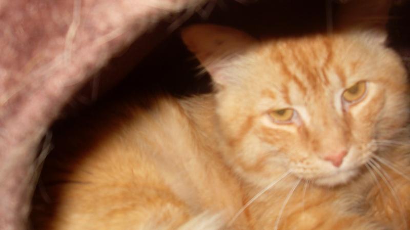 Fox mâle roux né en 2010 Sdc13010