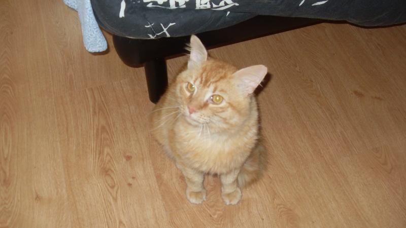 Fox mâle roux né en 2010 Sdc13012