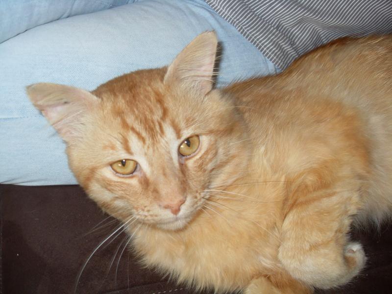 Fox mâle roux né en 2010 Sdc13017