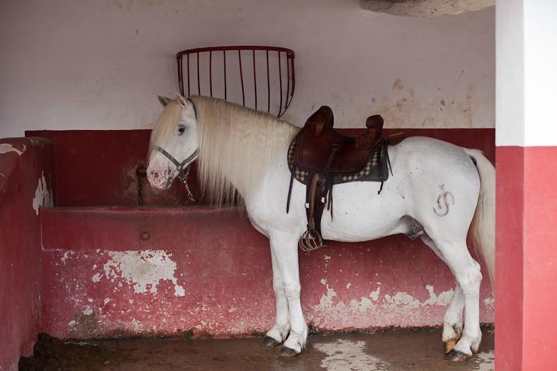 Etalons camargues pour vos saillies 2011 Img_6710