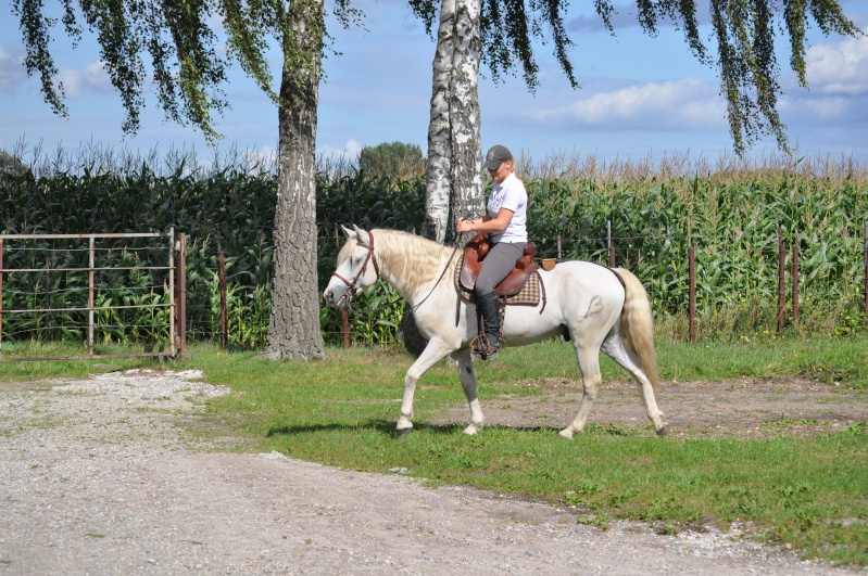 Etalons camargues pour vos saillies 2011 Poulai35