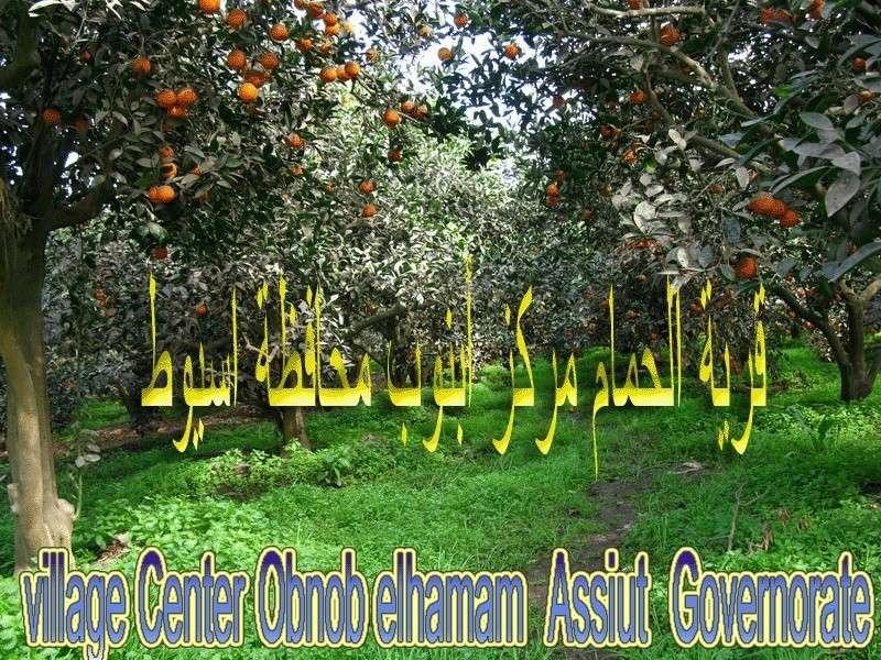 لجان قرية الحمام مركز أبنوب محافظة أسيوط  تتخطى ال50 %  13110