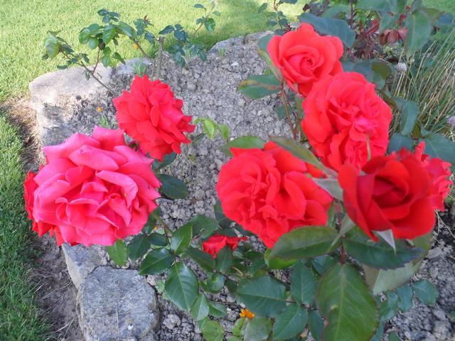 Fleurs d'extérieur - Page 16 00412