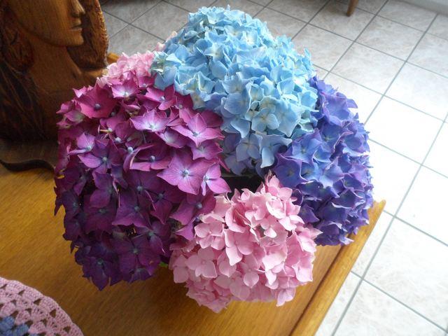 Fleurs d'extérieur - Page 16 00811
