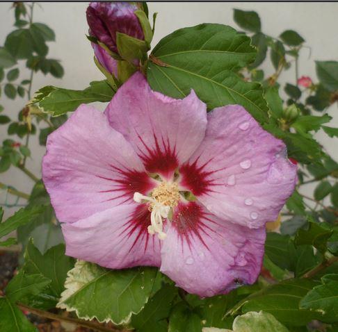 Fleurs d'extérieur - Page 16 Captur20