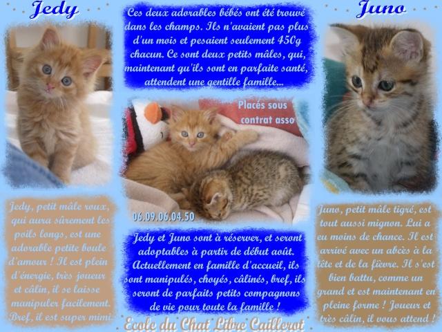 JUNO - tigré clair - (Jedy est adopté) - 05/2014  Juno_e10