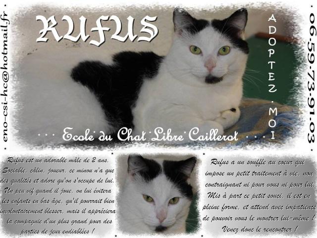 RUFUS - Européen noir et blanc - 04/2012 Rufus10