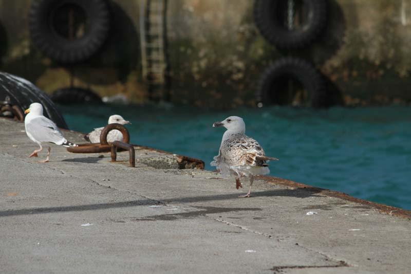 Bloscon : le port en eaux profondes de Roscoff Port_r16