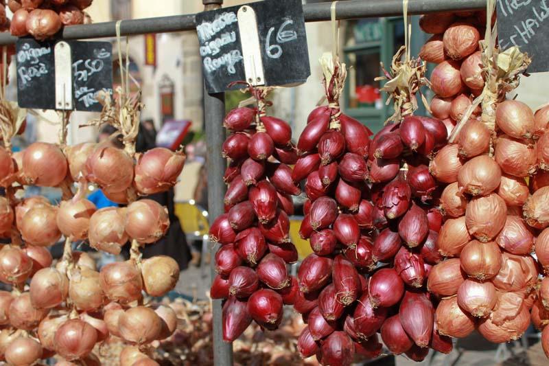 Au pays de l'oignon rose (Roscoff, Plouescat, Batz...) Rennes10