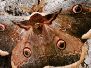 fil(et) à papillons Copy_o58