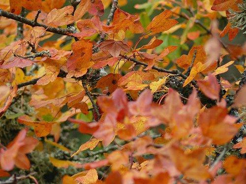 l'automne arrive... - Page 2 Copy_o93