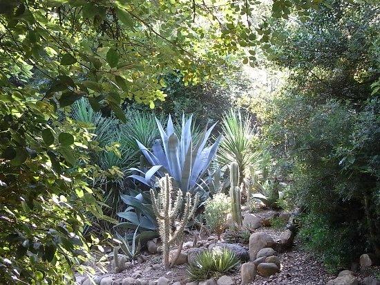 (13) Le Parc du Mugel et son jardin exotique - La Ciotat - Page 3 Fin_ju27