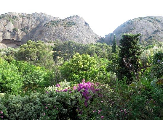 (13) Le Parc du Mugel et son jardin exotique - La Ciotat - Page 3 Juin_242