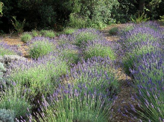 (13) Le Parc du Mugel et son jardin exotique - La Ciotat - Page 3 Juin_243