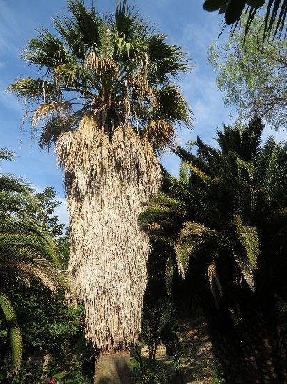 (13) Le Parc du Mugel et son jardin exotique - La Ciotat - Page 3 Juin_244