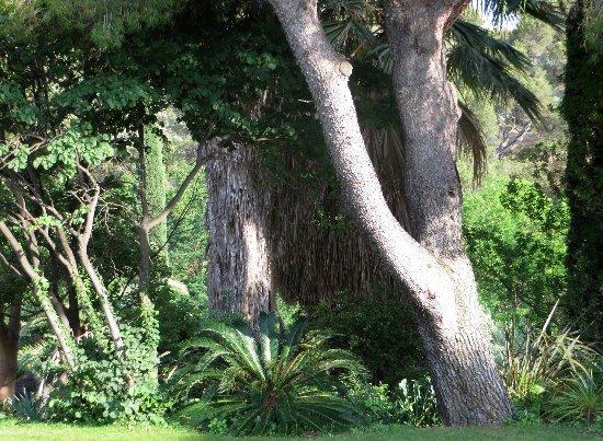 (13) Le Parc du Mugel et son jardin exotique - La Ciotat - Page 3 Juin_245