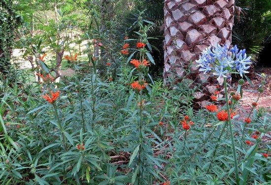 (13) Le Parc du Mugel et son jardin exotique - La Ciotat - Page 3 Juin_246