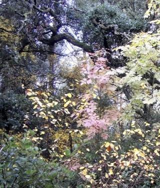 l'automne arrive... - Page 4 Novemb15