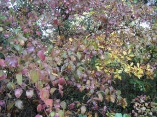 l'automne arrive... - Page 4 Novemb16