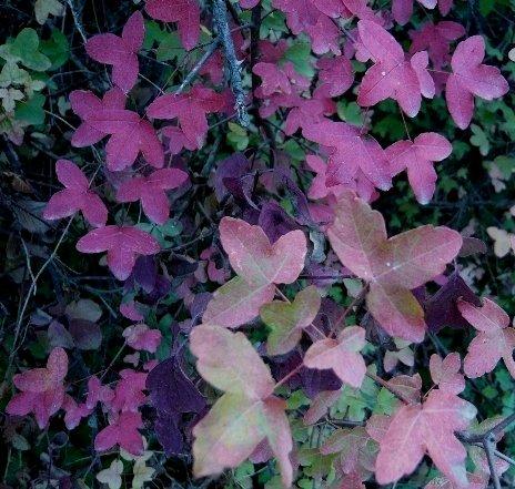 l'automne arrive... Octobr18