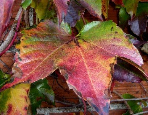 l'automne arrive... - Page 2 Octobr27
