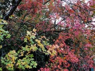 l'automne arrive... - Page 4 Octobr36