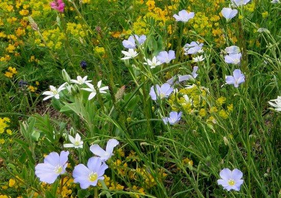 prairies alpines début juin dans le Briançonnais (05) Ornith10