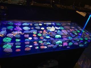 Interzoo 2014 & The Sea Farm Nl2-110