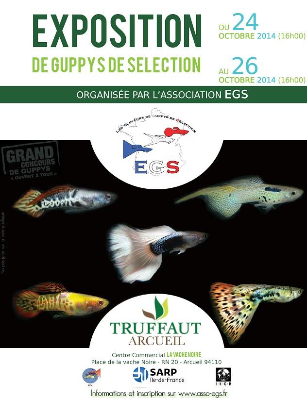 Concours de guppys Affich10
