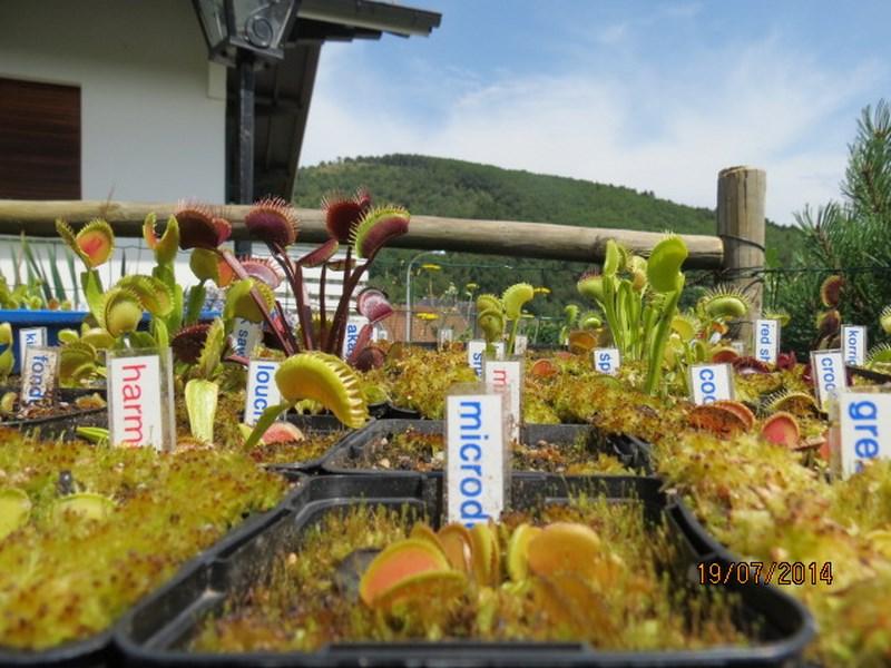 Les plantes à davo68 2014 112