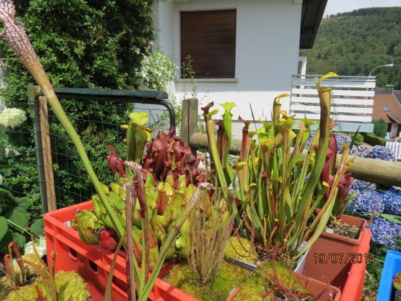 Les plantes à davo68 2014 311