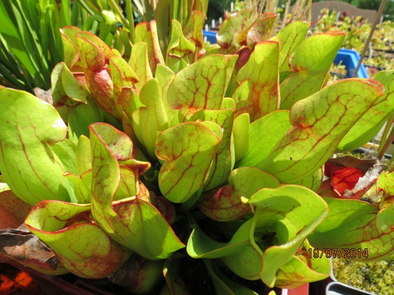Les plantes à davo68 2014 411
