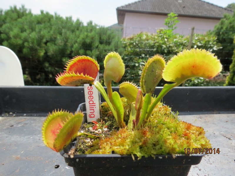 Les plantes à davo68 2014 Img_0037