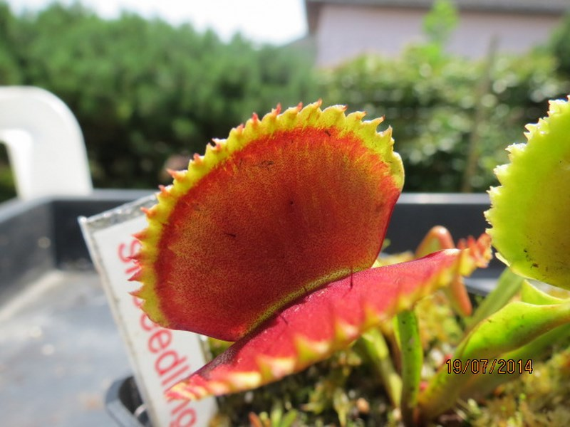 Les plantes à davo68 2014 Img_0038