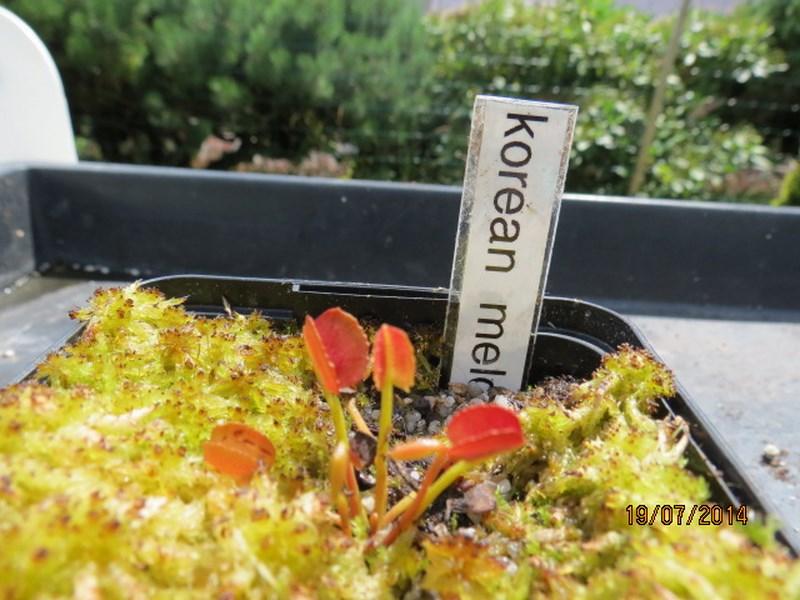 Les plantes à davo68 2014 Img_0041