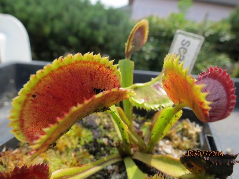Les plantes à davo68 2014 Img_0043