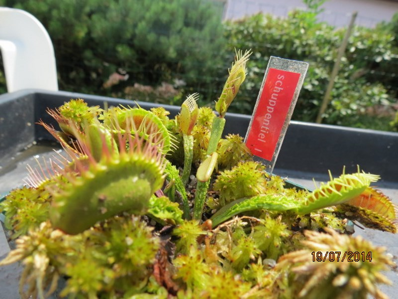 Les plantes à davo68 2014 Img_0044