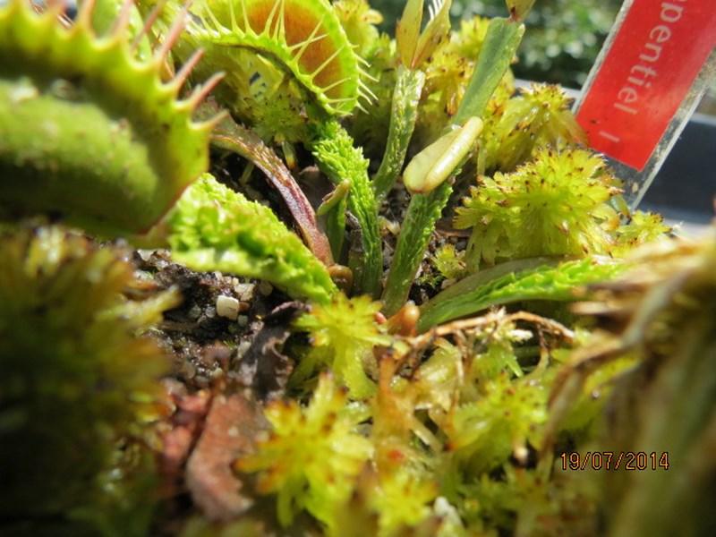 Les plantes à davo68 2014 Img_0045