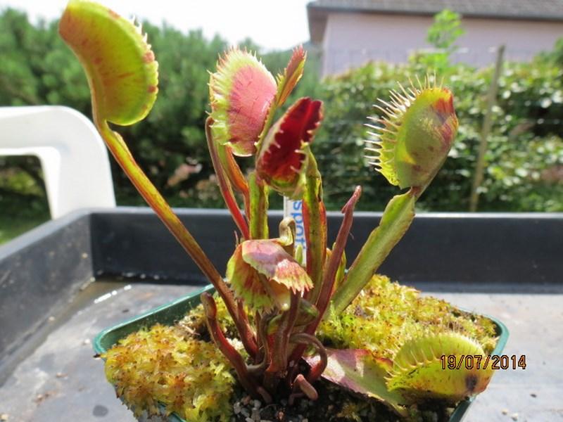 Les plantes à davo68 2014 Img_0046