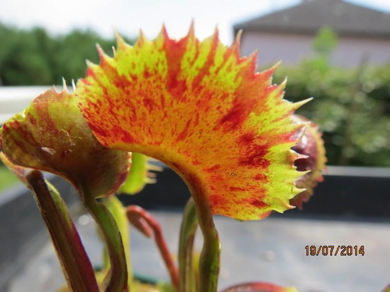Les plantes à davo68 2014 Img_0047
