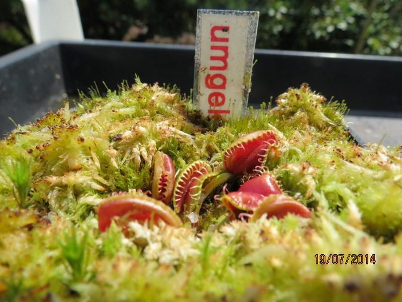 Les plantes à davo68 2014 Img_0048